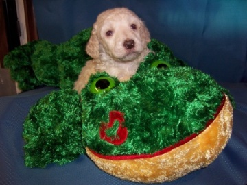 Nebraska Dog Breeding Laws